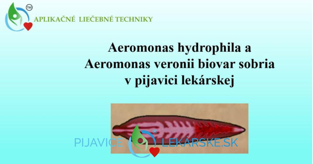 Aeromonas - prirodzená súčasť - symbiont, pijavice lekárskej