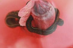 Pijavice na štýl krvavých klobások 4